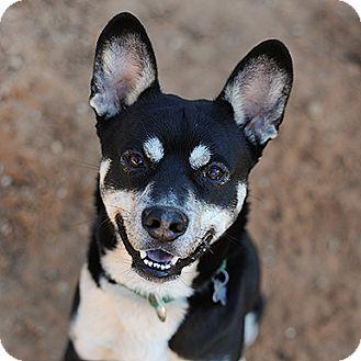 Siberian Husky Dog for adoption in Kanab, Utah - Squid