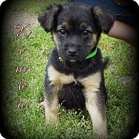 Adopt A Pet :: Kimba - Denver, NC