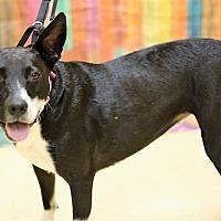 Adopt A Pet :: Precious - Lyles, TN