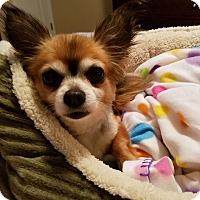 Adopt A Pet :: Yoshi - San Diego, CA