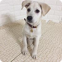 Adopt A Pet :: Mochi - Fairfax, VA