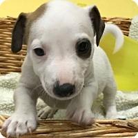 Adopt A Pet :: Tanner - Decatur, AL