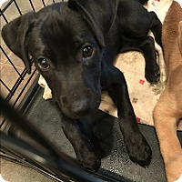 Adopt A Pet :: Lakely - Homewood, AL