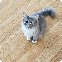 Adopt A Pet :: Joy - Wilmington, NC