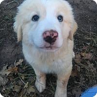 Adopt A Pet :: *SUGAR* - Weatherford, TX