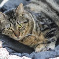 Adopt A Pet :: Wilma - Covington, LA