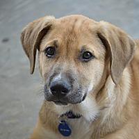 Adopt A Pet :: Axel - Frisco, TX