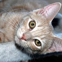 Adopt A Pet :: Denver - Auburn, CA