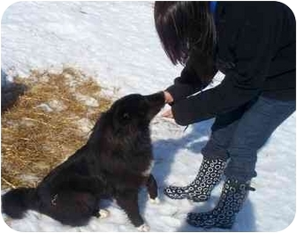 Border Collie Mix Dog for adoption in Cold Lake, Alberta - Polo