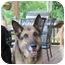 Photo 3 - German Shepherd Dog Dog for adoption in Rochester/Buffalo, New York - Bauer