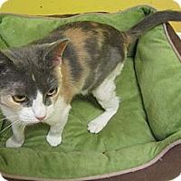 Adopt A Pet :: Julie - Mobile, AL