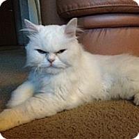 Adopt A Pet :: Maxim - Sterling Hgts, MI
