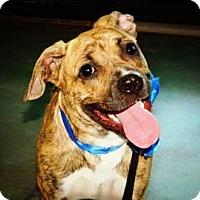 Adopt A Pet :: Dakota - Cheyenne, WY