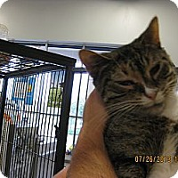 Adopt A Pet :: Spring - West Dundee, IL
