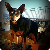 Adopt A Pet :: Bonnie - Alamogordo, NM