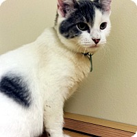 Adopt A Pet :: Rick - Edmond, OK