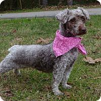 Adopt A Pet :: Savannah - Mocksville, NC