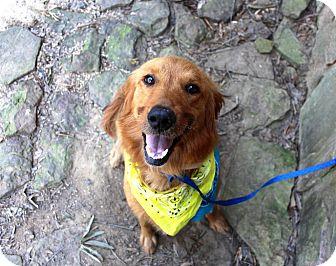 Golden Retriever Mix Dog for adoption in Muldrow, Oklahoma - Bella