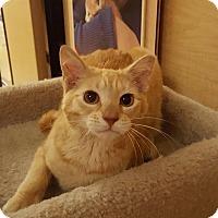 Adopt A Pet :: Petey - Jackson, NJ
