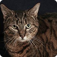 Adopt A Pet :: Tansy - Toms River, NJ