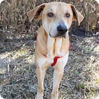 Adopt A Pet :: Sycamore - Jacksonville, NC