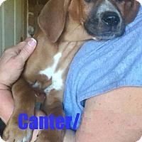 Adopt A Pet :: Canter - North Brunswick, NJ