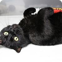 Adopt A Pet :: Angus - Medfield, MA