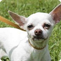Adopt A Pet :: GUERA - West Palm Beach, FL