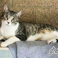 Adopt A Pet :: BUDDY - Irvine, CA