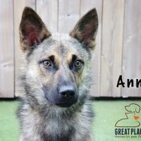 Adopt A Pet :: Annie - Merriam, KS
