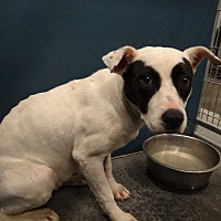 Adopt A Pet :: Snow - Henderson, NC