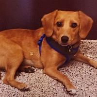 Adopt A Pet :: Lila - Palatine, IL