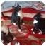 Photo 2 - Domestic Shorthair Kitten for adoption in Davis, California - Ginger