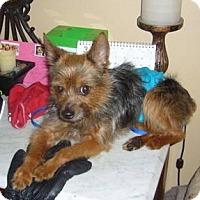 Adopt A Pet :: NJ - Benji - Columbus, OH