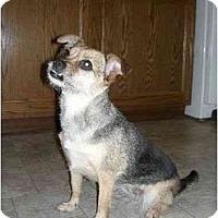 Adopt A Pet :: Mini - Clementon, NJ