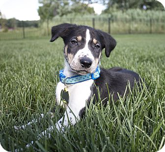 Spaniel (Unknown Type) Mix Puppy for adoption in Chesterfield, Michigan - Freckles 2014 (m/c)
