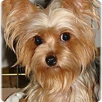 Adopt A Pet :: Pumpkin - Palm City, FL