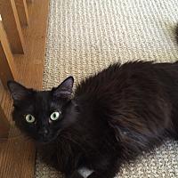 Adopt A Pet :: Midnight - Monrovia, CA
