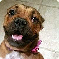 Adopt A Pet :: Liberty - Los Angeles, CA
