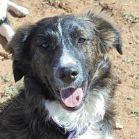 Adopt A Pet :: Jordan - Anton, TX