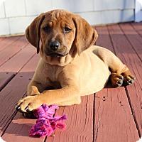 Adopt A Pet :: *Cat - PENDING - Westport, CT