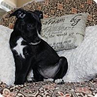 Adopt A Pet :: Keena - Alpharetta, GA