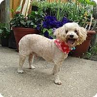 Adopt A Pet :: Mr. Peanut - Shawnee Mission, KS