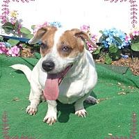 Adopt A Pet :: SHILOH- also see ROYAL - Marietta, GA
