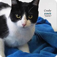 Adopt A Pet :: Crosby - Belle Chasse, LA