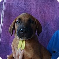 Adopt A Pet :: Conner - Oviedo, FL