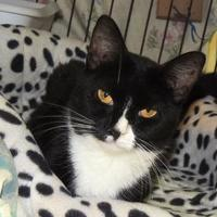 Adopt A Pet :: Percy - Westville, IN