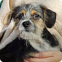 Adopt A Pet :: Heinz - Joplin, MO