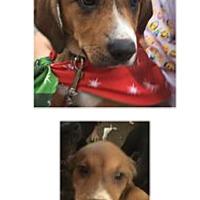 Adopt A Pet :: Leeta - Patterson, NY