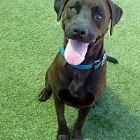 Adopt A Pet :: Cooper #5 & Harley - Rockville, MD